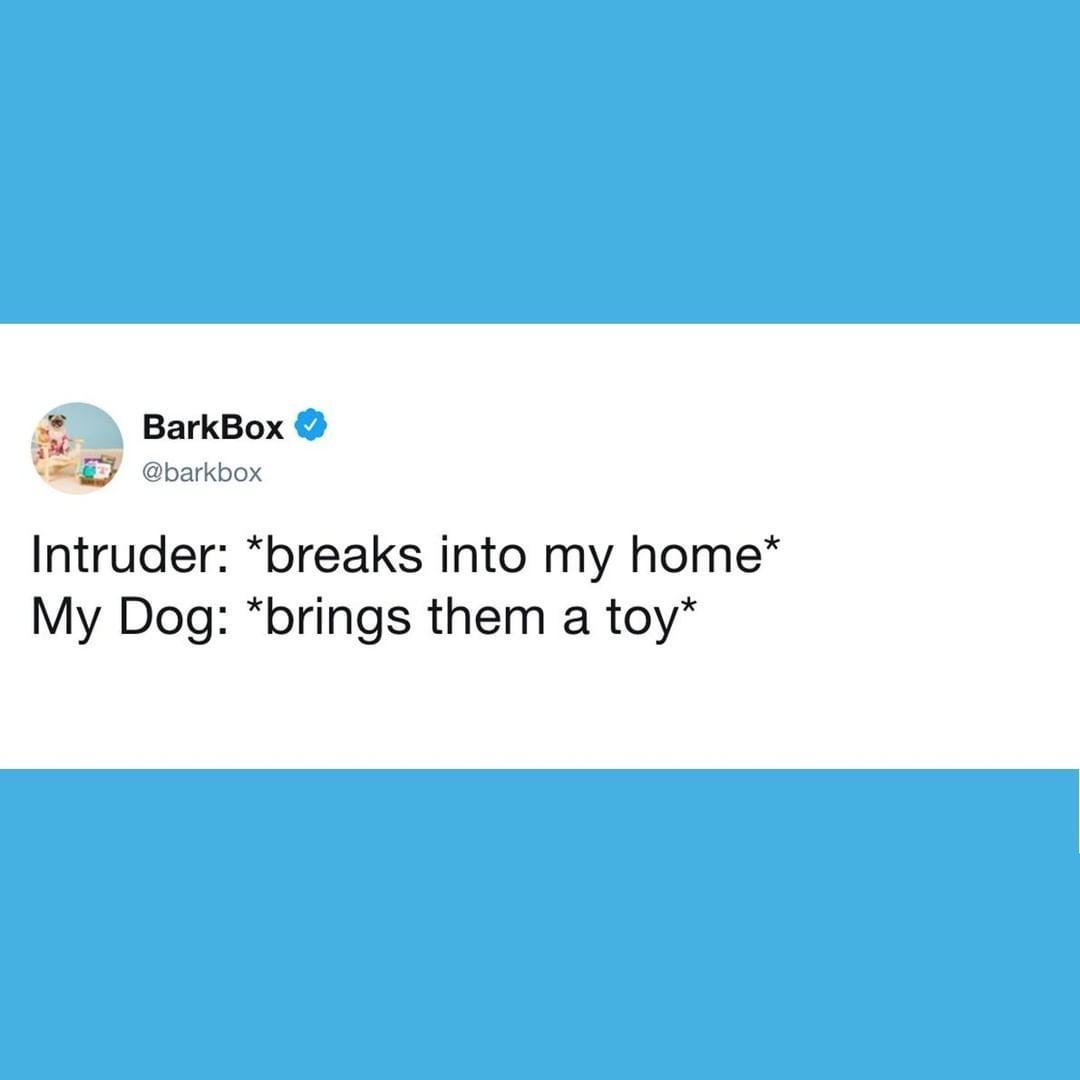 barkbox tweet